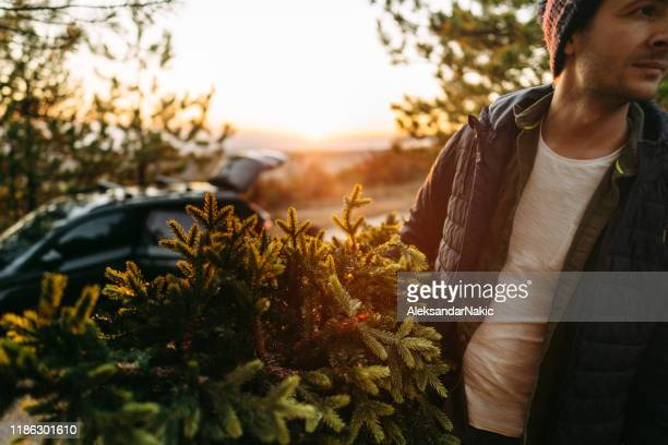 young man carrying home his christmas tree - christmas tree farm stock pictures, royalty-free photos & images