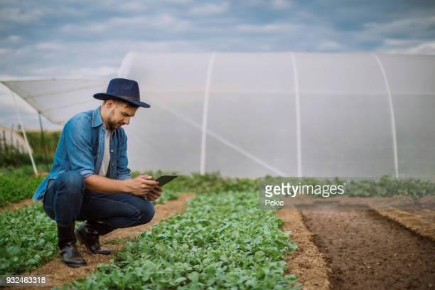 junger mann prüfen tablet informationen für seine kulturen - kulturpflanze stock-fotos und bilder