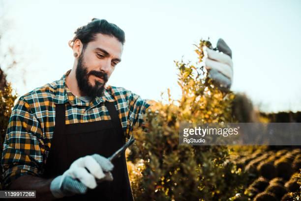 若い男クリッピングヘッジ - 造園師 ストックフォトと画像