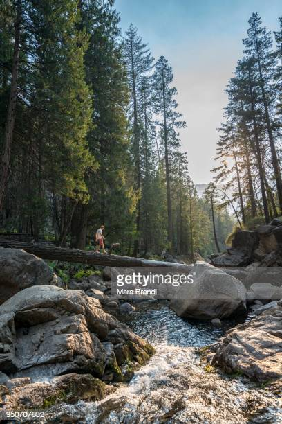Young man crossing a tree trunk over the Merced River, Mist Trail, Yosemite National Park, California, USA