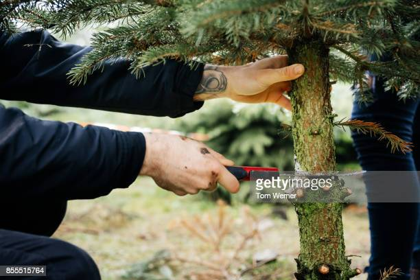 Young Man Cutting Down Pine Tree To Take Home For Christmas