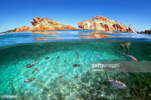 a young man dives into the water enjoying the seabed on the island of menorca - balearic islands stock pictures, royalty-free photos & images