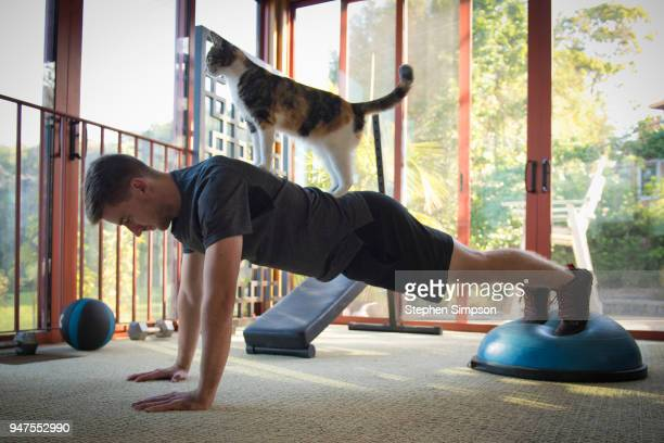 young man exercise with cat on his back - funny cats photos et images de collection
