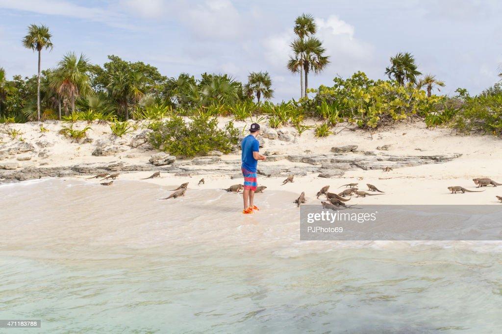 Junger Mann feeds Gruppe von iguanas-Bahamas : Stock-Foto