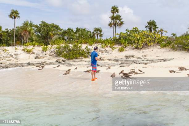young man feeds group of iguanas - bahamas - pjphoto69 stock pictures, royalty-free photos & images