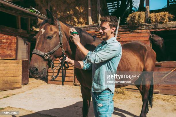 Young man grooming a brown horse outdoors