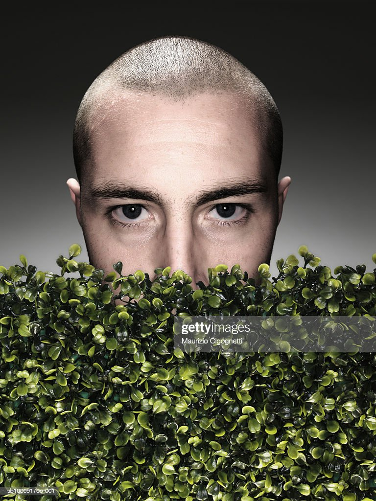 Young man half covered by boxwood hedge, portrait, high section, studio shot : Stockfoto