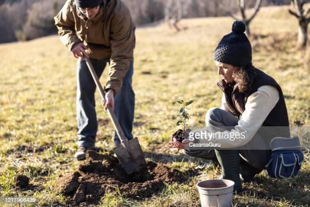 大人の女性が牧草地に木を植えるのを手伝う若い男 - 植える ストックフォトと画像