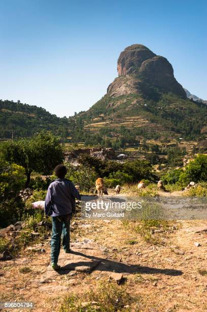 Young man herding goats in the Adwa mountains, Tigray, Ethiopia