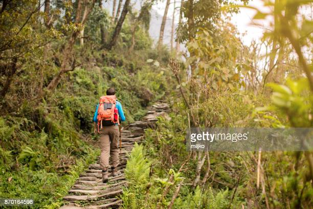 Young man hiking through the rainforest