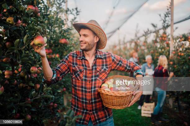 Young man holding a basket of apples
