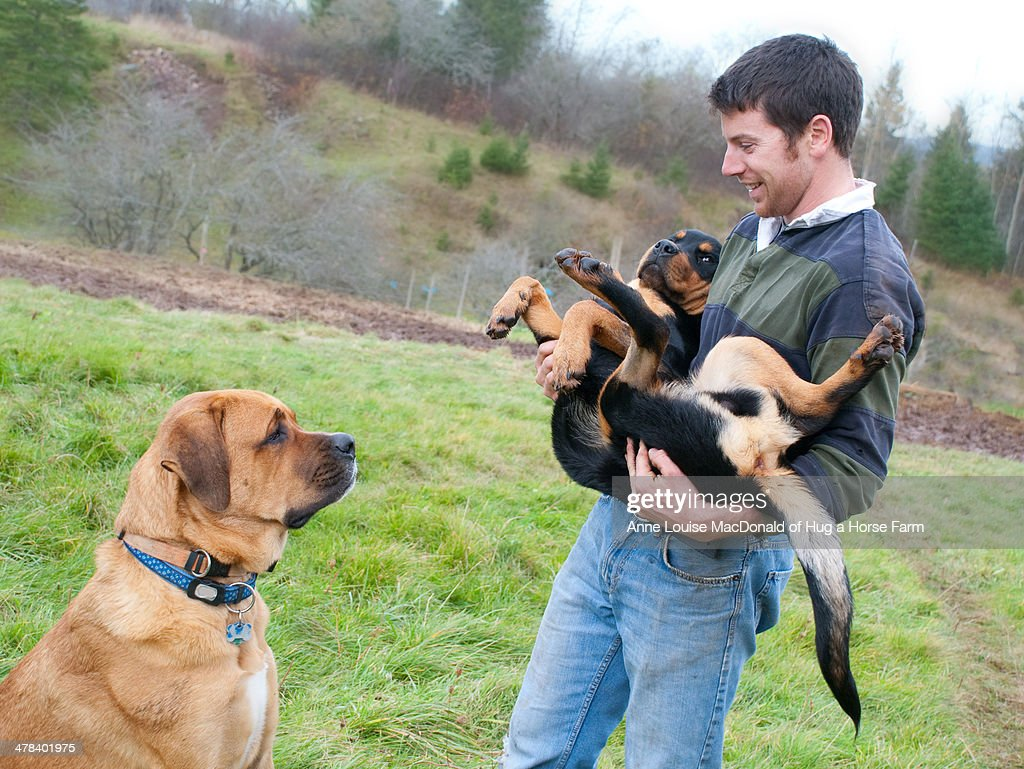 young man holding huge puppy as mastiff looks on ストックフォト