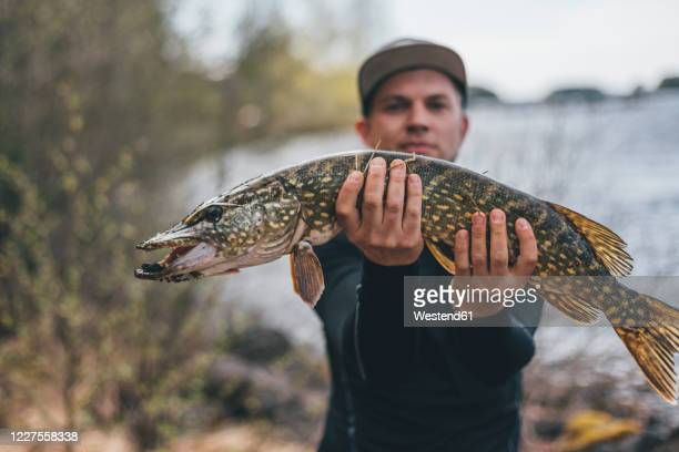young man holding proudly pike into camera - pike fish stock pictures, royalty-free photos & images