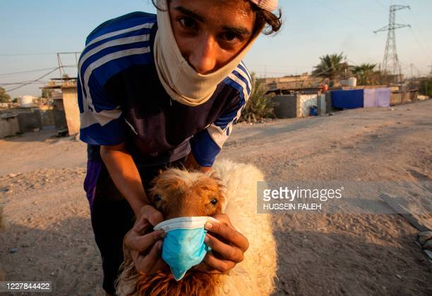 Young man holds a face mask against the snout of a sheep in the southern Iraqi port city of Basra on July 30 as Muslims across the world get ready to...
