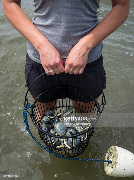 A young man holds a metal basket with Quahog clams taken in Town Cove of Orleans Massachusetts on July 14 2012 Quahogs are the predominant mollusk...