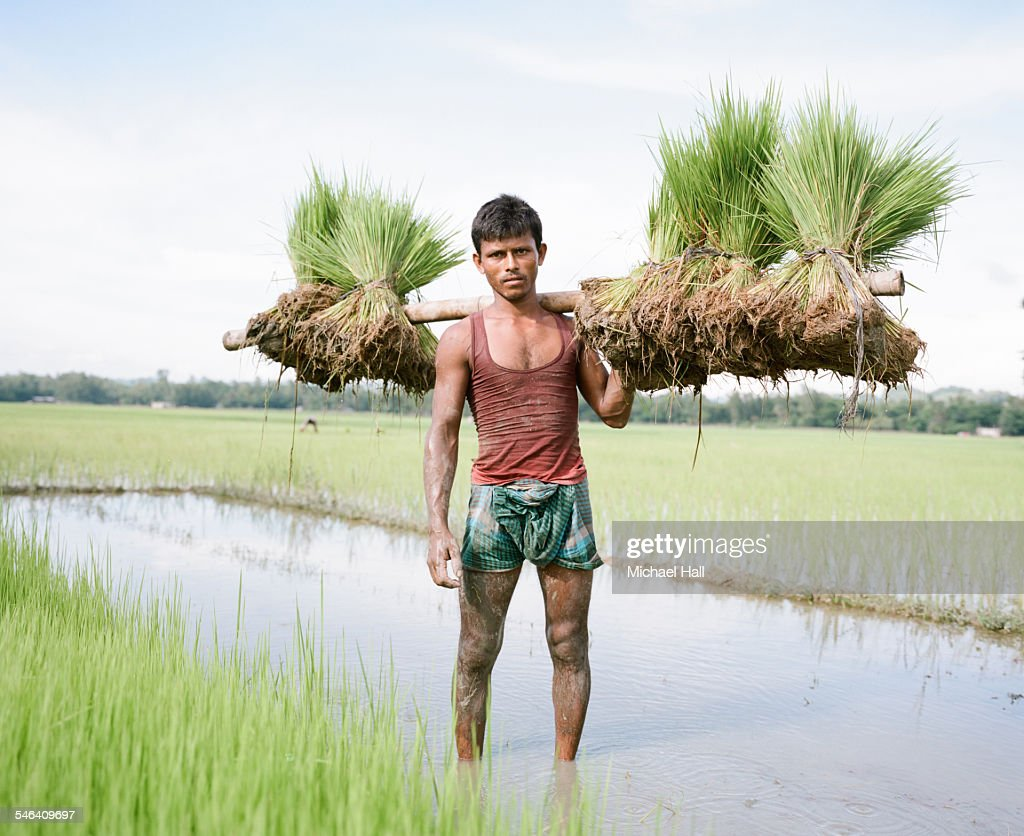 Young man in rice paddies : Stock Photo