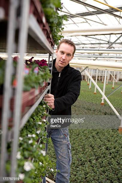 Young man is working hard in a greenhouse