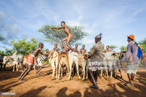 Young man jumping the bulls This is the rite of passage for boys coming to an age of becoming men Hamer tribe