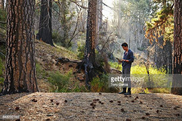 young man looking at digital tablet in forest, los angeles, california, usa - derrota imagens e fotografias de stock