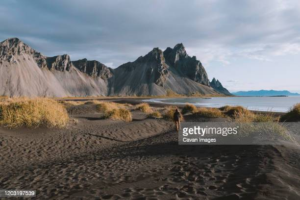 young man looking at dramatic mountains on beach in iceland - animals in the wild stock pictures, royalty-free photos & images
