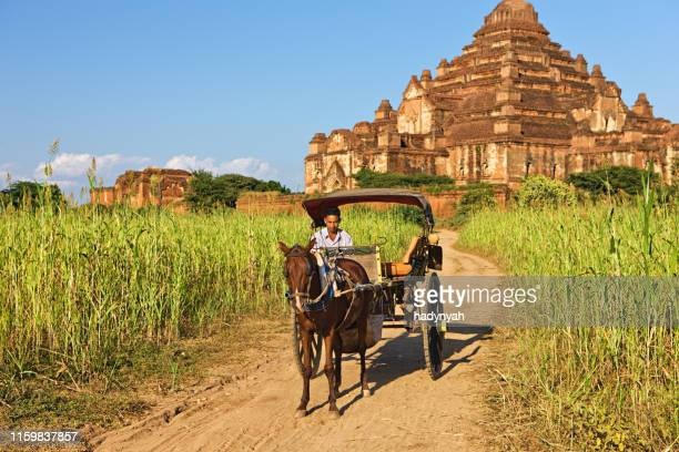 young man on the horse cart near temple in bagan - cart stock pictures, royalty-free photos & images