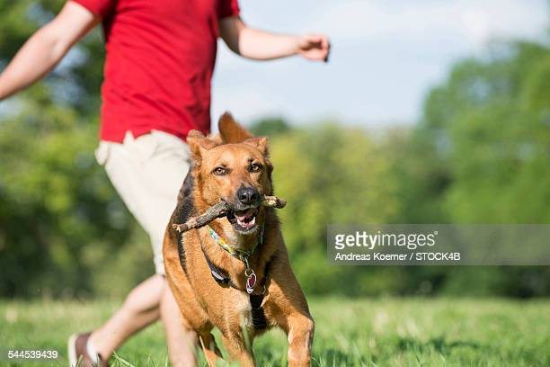 Young man playing with dog in park