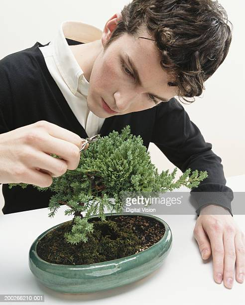 young man pruning bonsai tree with nail scissors, close-up - nail scissors stock pictures, royalty-free photos & images