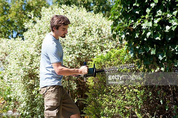 Young man pruning hedge with electric saw