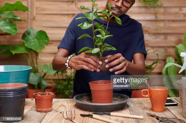 young man repotting a plant on his terrace - potting stock pictures, royalty-free photos & images