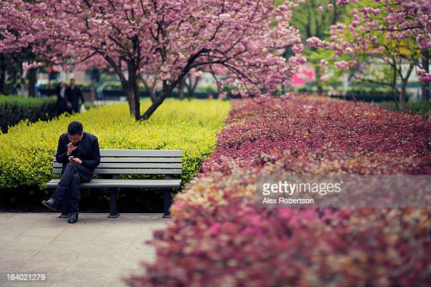 CONTENT] A young man sits smoking and looking at his smartphone on a park bench in Shanghai surrounded by cherry blossom trees in spring