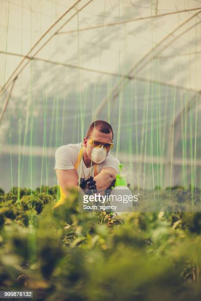 Young man spraying plants in greenhouse