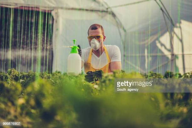 Young man spraying plants