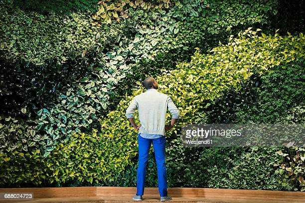 young man standing in front of green plant wall, rear view - business finance and industry stock-fotos und bilder