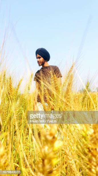 young man standing on wheat field against clear sky - punjab - india stock pictures, royalty-free photos & images