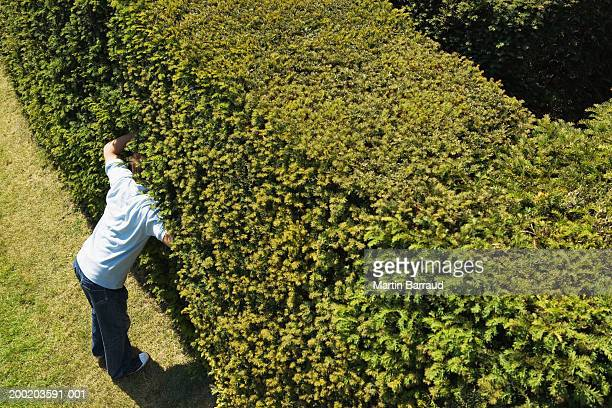 young man sticking head in hedge of maze, elevated view - caught cheating stock pictures, royalty-free photos & images