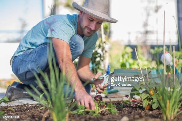 Young man tending to plants in garden