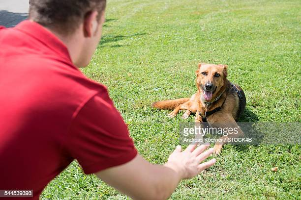Young man training dog in park