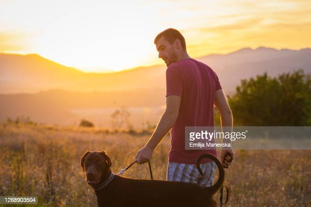 young man training his dog - rescue stock pictures, royalty-free photos & images