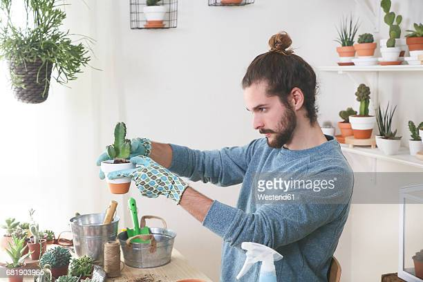 young man transplanting cactus in his studio - man bun stock pictures, royalty-free photos & images