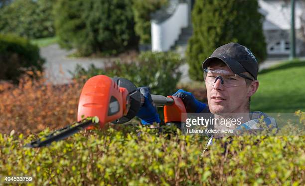 Young man trimming bushes