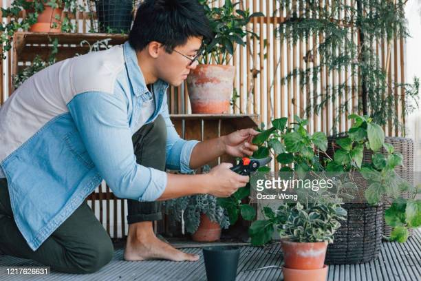 young man trimming potted plants on the balcony - balcony stock pictures, royalty-free photos & images