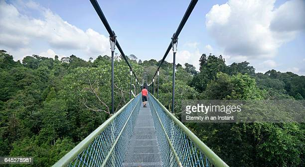 Young man walking on a bridge over a forest