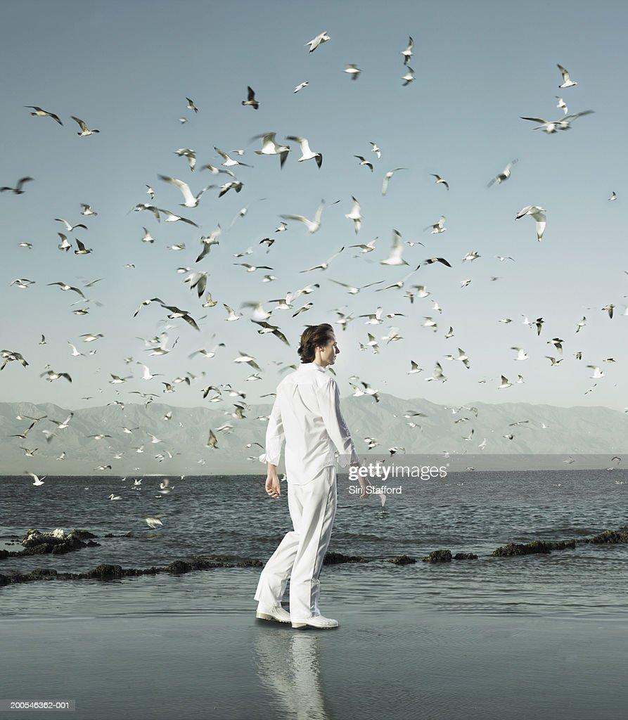 Young man walking on shore amongst flocks of birds (Digital Composite) : Bildbanksbilder