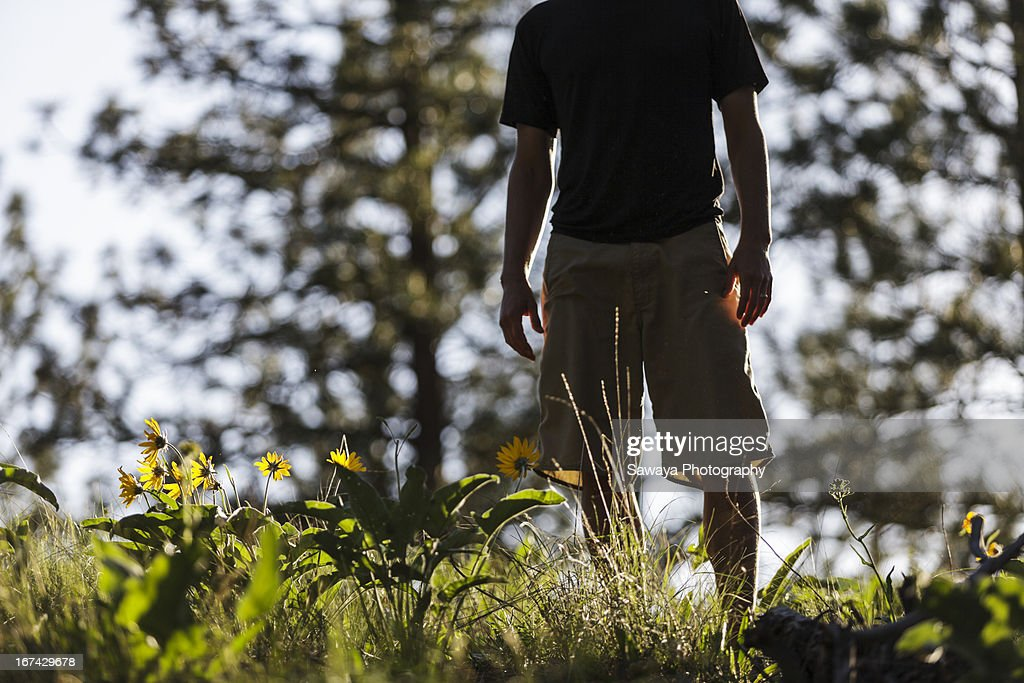 A young man walking through forest sunflowers : Foto de stock