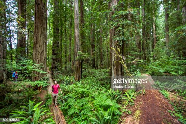 A young man walks along a fallen log in Redwoods National Park, CA.