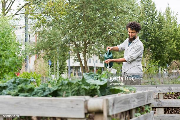 Young man watering plants of a raised bed