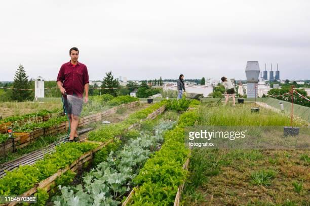 jonge man wateren kruiden en planten wateren planten in een stedelijke tuin - landbouwgrond stockfoto's en -beelden