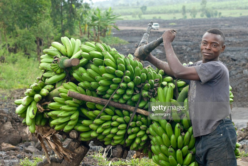 young man with a heavy load of bananas, eastern Congo : Stock Photo