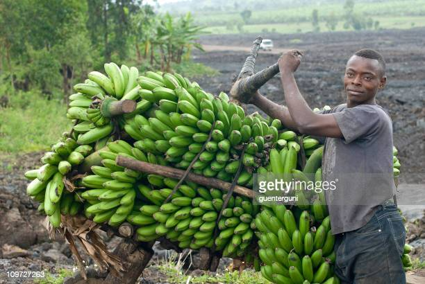 young man with a heavy load of bananas, eastern Congo