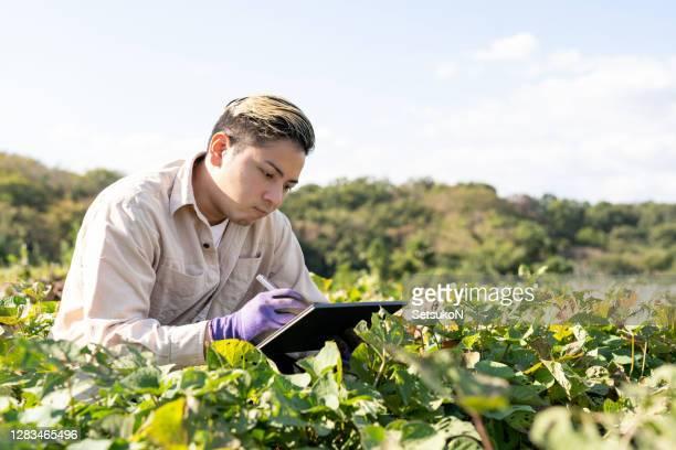 フィールドでサツマイモの葉をチェックするデジタルタブレットを持つ若者。スマート農業。 - スマート農業 ストックフォトと画像